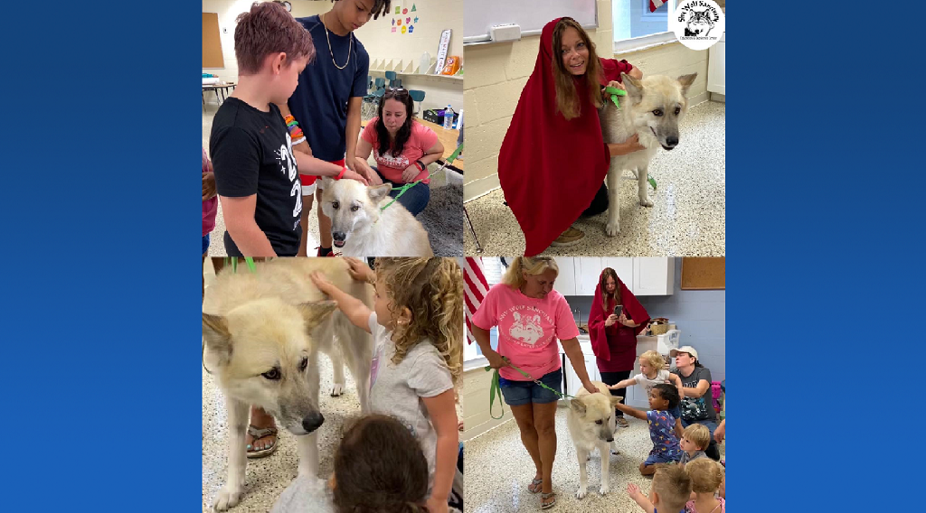 """Shy Wolf Sanctuary reads """"Little Red Riding Hood"""" at school in North Fort Myers"""