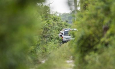 A member of the Florida Fish and Wildlife Conservation Commission is seen near the scene of an alligator attack a short distance down a power line near Lexington Middle School on Monday. The attack is under investigation. An independent alligator trapper is on scene.