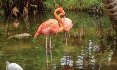 The Flamingo Pond at the Wonder Gardens in Bonita Springs. TIM GIBBONS / FLORIDA WEEKLY