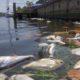 Ag Commissioner Nikki Fried tours SWFL to address red tide, blue-green algae