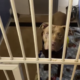 Shelter pets arrive from Louisiana in the aftermath of Hurricane Ida