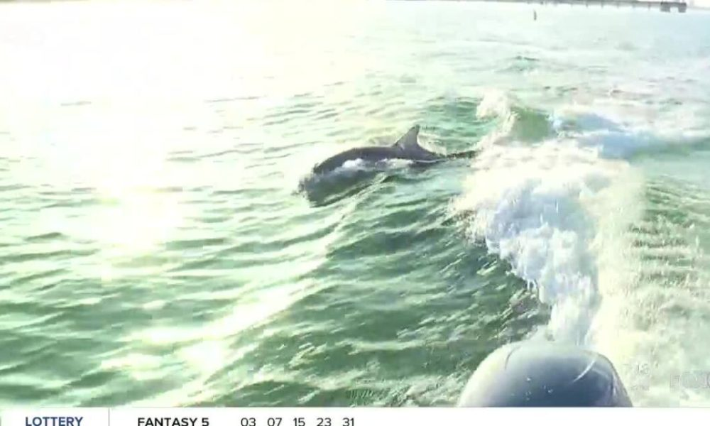 Dolphin and Shelling Cruises for Weekend Vacation in SWFL